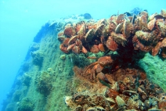Затонувший корабль «Роклифф»